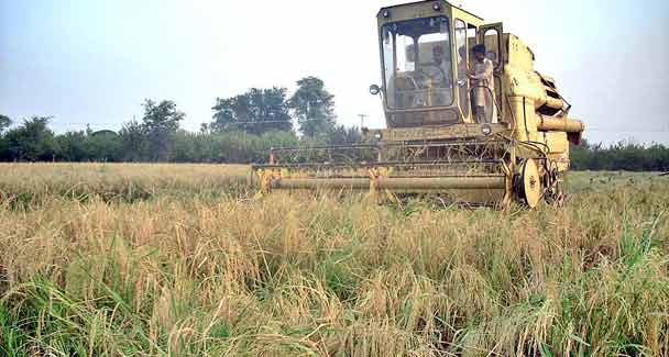 Agricultural Problems And Importance In Pakistan