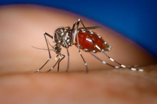 Dengue Fever In Pakistan symptoms diagnosis