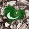14 August Wallpapers Pakistan