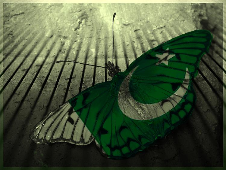 14 August Pakistan Flag Wallpapers Free Download