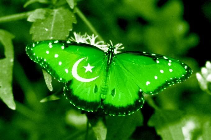 Happy Independence Day  - 14th August Pakistan Independence Day Facebook Cover