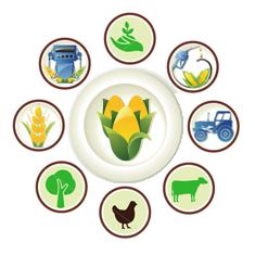 Top Agricultural Universities in Pakistan List