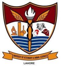 UVAS Undergraduate Merit List 2018