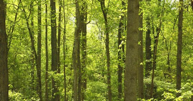 Most Important Forest in Pakistan
