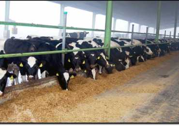 Dairy Farming in Pakistan Business Plan