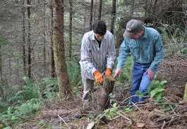 Forestry Programs After 12th Class In Pakistan